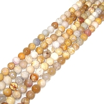 1 Strand of 8mm Round Semiprecious Gemstone Beads - Fossilized Coral